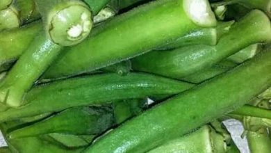 Photo of Okra Benefits